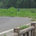 Photos: 池の周りの草刈り