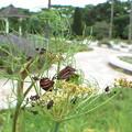 写真: ここがMFの大阪長居植物園 お馴染みのアカスジカメムシ