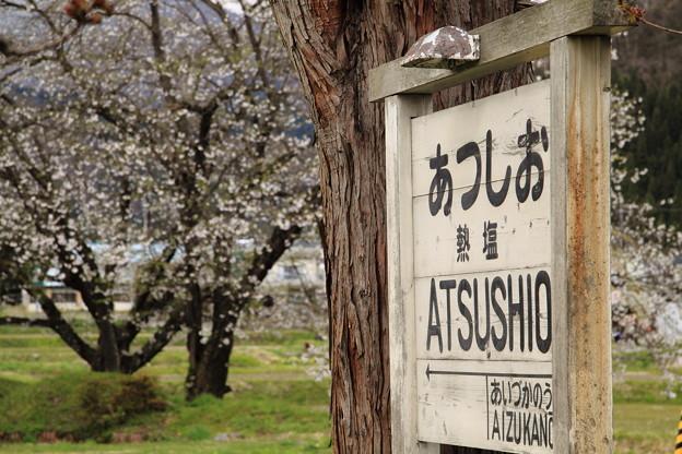 Photos: 桜と駅名標