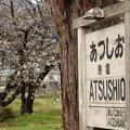 桜と駅名標