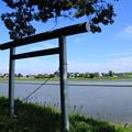 写真: 水田と鳥居