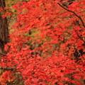 奥会津の紅葉2