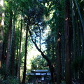 森の中の神社