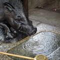 Photos: 神水流せし猪、護王社にて