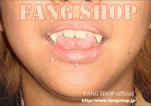 FANG SHOP 付け牙 N-0054