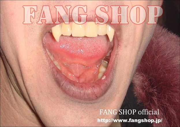 FANG SHOP 付け牙 N-0075