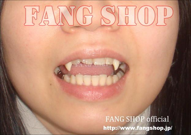 FANG SHOP 付け牙 N-0091