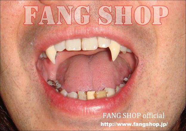 FANG SHOP 付け牙 N-0074