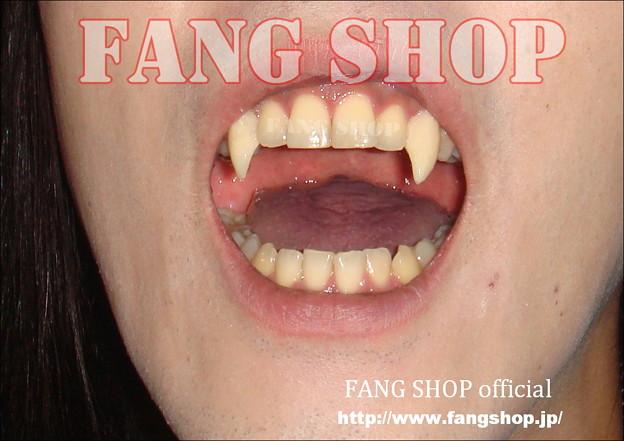 FANG SHOP 付け牙 N-0097
