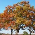 Photos: 秋の彩り。