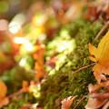 写真: 苔の絨毯・・・。