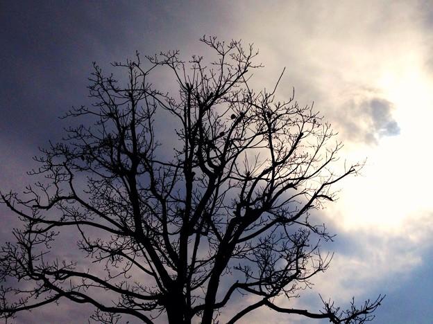 曇り空と枯木