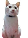 宮城県の南三陸町で迷い猫を探しています。