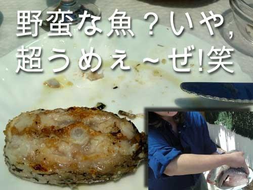 3570_fish