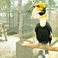 頭に卵焼きを載せている鳥、サイチョウ(爆)