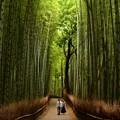 嵯峨野の竹林を歩く