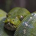 Photos: 蛇の寝顔