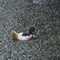 Photos: 最近ゲリラ豪雨が相次いでいますね