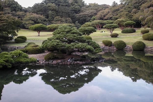 綺麗な庭園なんだが