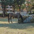 Photos: 秋の馬