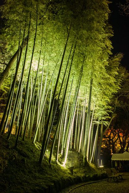Bamboo in the night