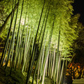 Bamboo in the night
