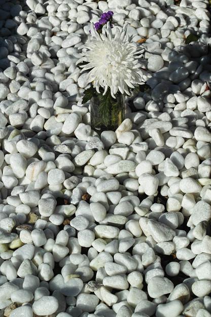 白い石と白い花