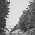 写真: 線路を触りながらSLが近づく事を実感しているなんてまさに昭和40年代前半ののどかな時代の事でした