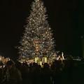 横浜赤レンガ倉庫のXmas Tree