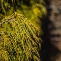 Photos: 葉っぱを撮ったつもりが