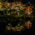大磯紅葉ライトアップ2012@SIGMA-DP1s-1