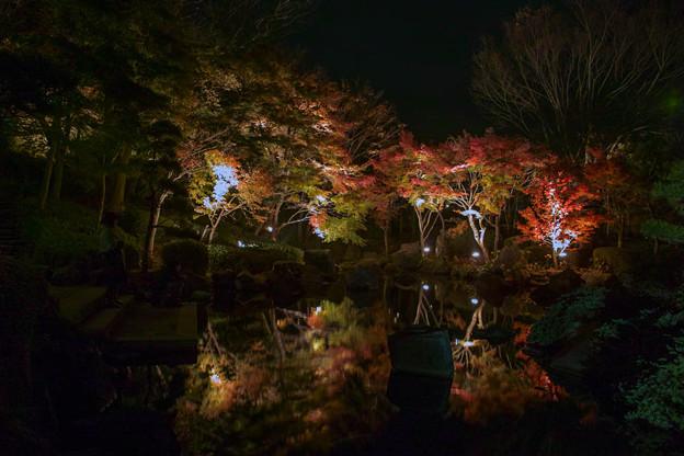 大磯紅葉ライトアップ2012@SIGMA-DP1s-3