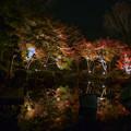 Photos: 大磯紅葉ライトアップ2012@SIGMA-DP1s-3