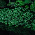 大磯紅葉ライトアップ2012@NIKON-D5100-3
