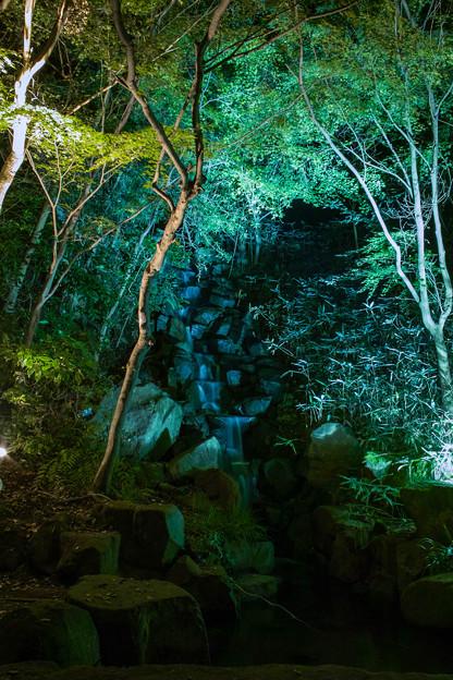 大磯紅葉ライトアップ2012@SIGMA-DP1s-4