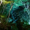 Photos: 大磯紅葉ライトアップ2012@SIGMA-DP1s-4
