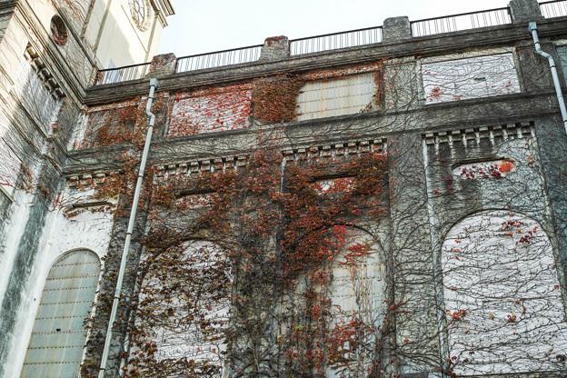 紅葉の蔦が這う根岸競馬場跡@SIGMA-DP2Merrill