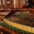 良い楽器は造形美も醸し出す