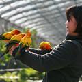 Photos: 掛川花鳥園は良いとこ、一度はおいで