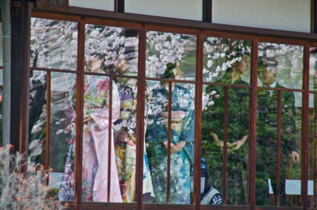 桜に映える着物姿