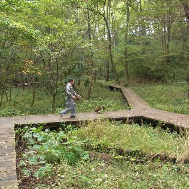 Photos: イノシシの散歩:-O