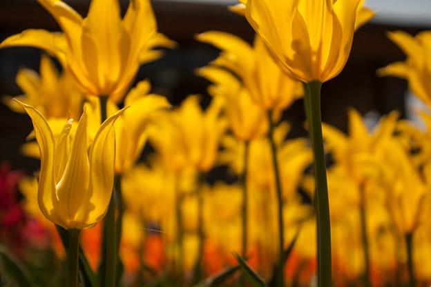 Photos: 春よ、来い!