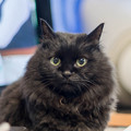 Photos: 悲しき猫