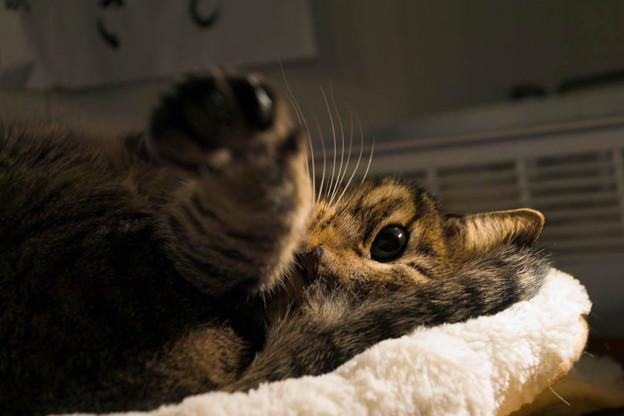 黄金の左ストレート猫punch!