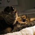 Photos: 黄金の左ストレート猫punch!