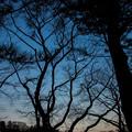 黄昏の影絵