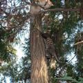Photos: ちいたま初めての木登り実習