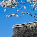 萱葺きの屋根と白梅
