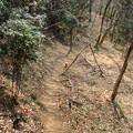 Photos: 猫のハイキング2