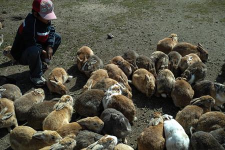 うわぁ、うさぎ!兎!ウサギ!@広島県の大久野島の兎たち